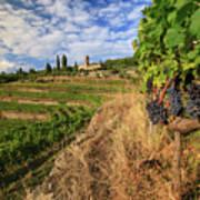 Tuscan Vineyard And Grapes Poster