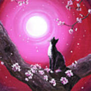 Tuxedo Cat In Cherry Blossoms Poster