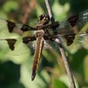 Twelve Spotted Skimmer Dragonfly Poster