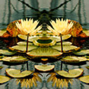 Twin Pond Lillies Poster