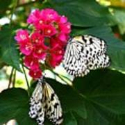 Two Butterflies Poster
