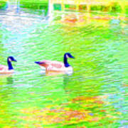 Two Canadian Geese In The Water Poster