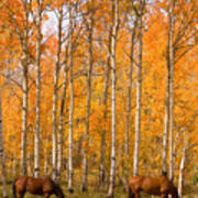 Two Colorado High Country Autumn Horses Poster