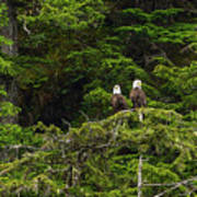 Two Eagles Perched Painterly Poster