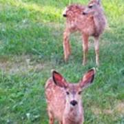 Two Fawn Poster