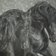 Two Friesian Stallions Poster