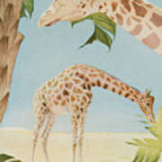 Two Giraffes Poster