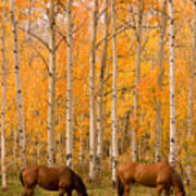 Two Horses Grazing In The Autumn Air Poster