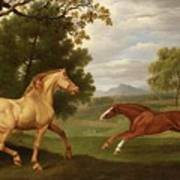 Two Horses In A Landscape Poster