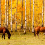 Two Horses In The Colorado Fall Foliage Poster