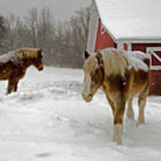 Two Horses In Winter Poster