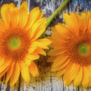 Two Lovely Sunflowers Poster
