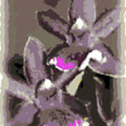 Two Orchids Poster