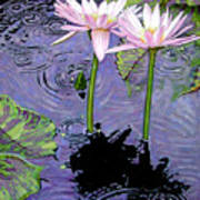 Two Pink Lilies In The Rain Poster