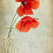 Two Poppies In A Glass Vase Poster