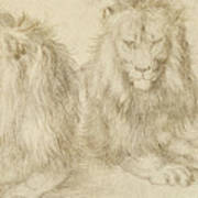 Two Seated Lions Poster