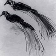 Two Studies Of A Bird Of Paradise 1630 Poster