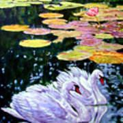 Two Swans In The Lilies Poster
