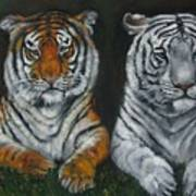 Two Tigers Oil Painting Poster