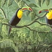 Two Toucans Poster