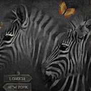 Two Zebras Poster