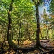 U Shaped Trees Cascade Mountain Ny New York Poster