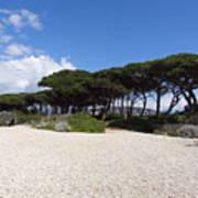 Umbrella Pine, Lerins Island Poster