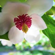 Under Flower Poster