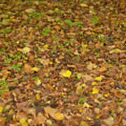Undergrowth, Leaves Carpet. Poster
