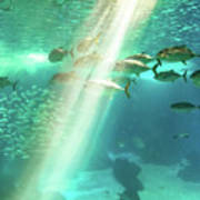 Underwater Background With Sunbeams Poster