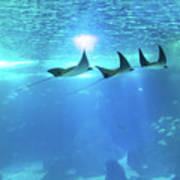Underwater Manta Background Poster