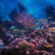 Underwater Paradise Poster