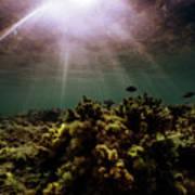 Underwater Sunset Poster