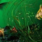 Underwater Wonderland  Diving The Reef Series. Poster