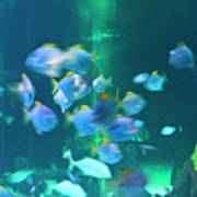 Underwater05 Poster