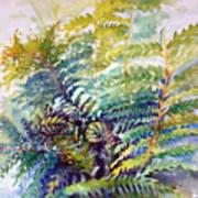 Unfurling Ferns Poster