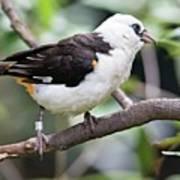 Unknown White Bird On Tree Branch Poster