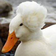 Updo Duck Poster