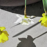 Upside Down Daffodils Poster
