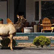 Urban Elk Poster