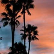 Urban Palms Poster