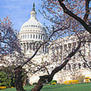 Us Capitol Building And Cherry Poster