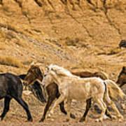 Ute Mountain Wild Horses On The Run Poster
