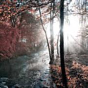 Valley Creek Sunrise Poster