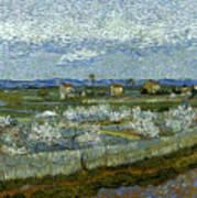 Van Gogh: Peach Tree, 1889 Poster