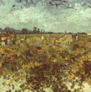 Van Gogh: Vineyard, 1888 Poster