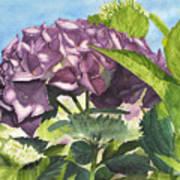 Vanessa's Flower Poster