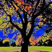 Oak Autumn Vasona Poster