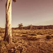 Vast Pastoral Australian Countryside  Poster