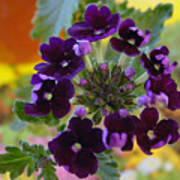 Velvet Petals Poster